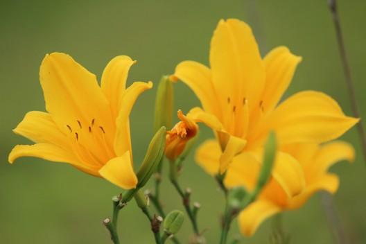 A fauna e flora do terreno são compostos por um bioma característico de Mata Atlântica.